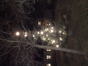 Juletræ m lys